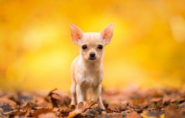 Осенняя фотосессия с пёсиками (20 фото)