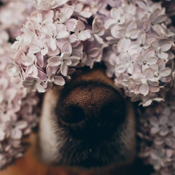 Любимые носики-курносики (50 фото)
