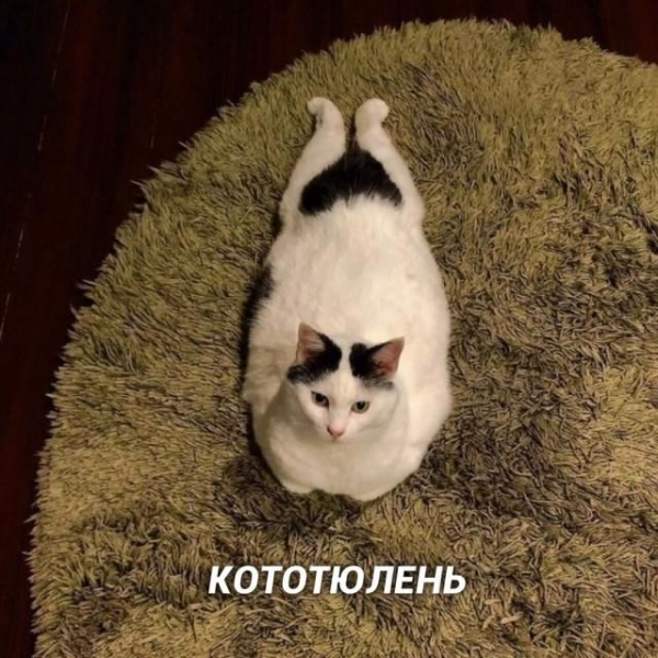 Смешные кошки (9 фото)