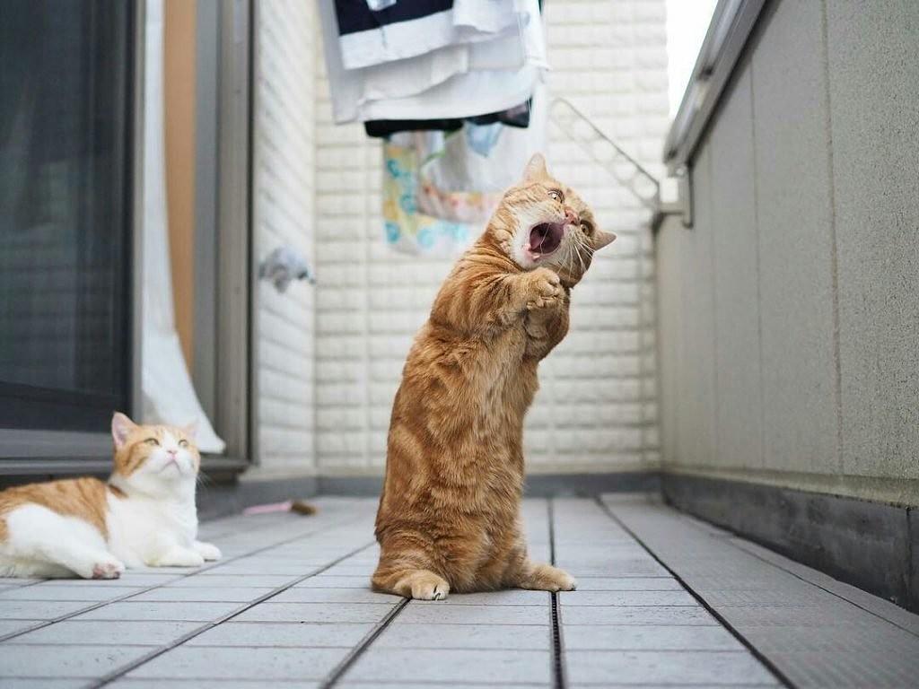 фото позитив животных про настроение новом семейном