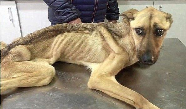 О собаке,человеческой жестокости и доброте... (9 фото)
