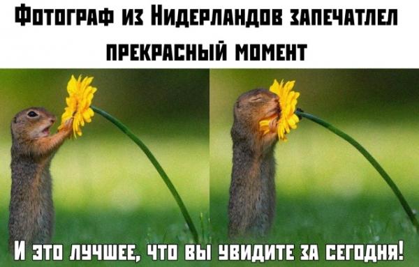 Просто для улыбки! (30 фото)