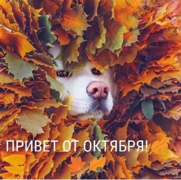 Осенний натюрморт (30 фото)