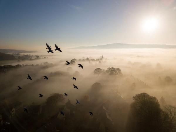 Победители конкурса фотографий дикой природы 2019 (16 фото)