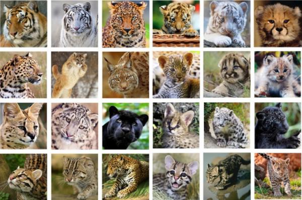 Удивительные факты про больших кошек в дикой природе