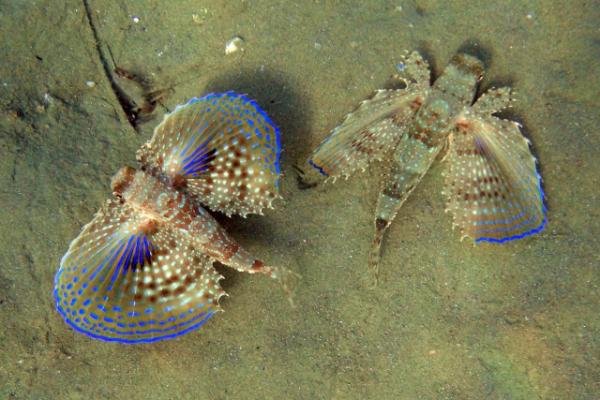 Подводные бабочки (6 фото)