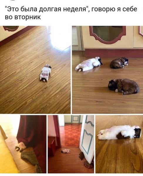 Животные, которые умеют отдыхать (20 фото)