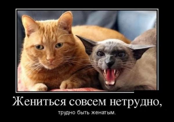 Смешные и забавные животные (30 фото)