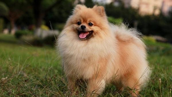 6 пород собак для аллергиков, для маленькой квартиры и для детей