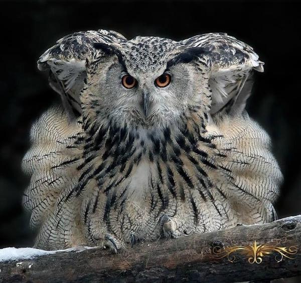 Изумительный мир пернатых (30 фото)