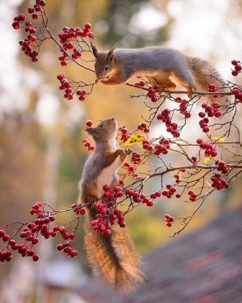 Ноябрьские мотивы (30 фото)