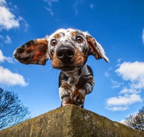 Фотографии пёсиков от Cat Race (25 фото)