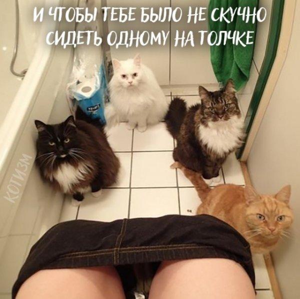 Девять причин, почему Вам срочно надо завести кота (9 фото)