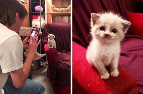 Домашние животные, которые знают, как хорошо получиться на фотографии (17 фото)