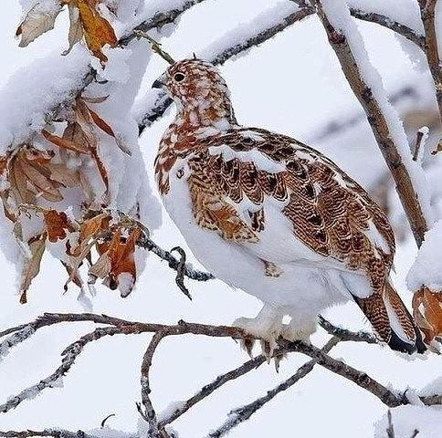 Фото дня: Природный камуфляж:)