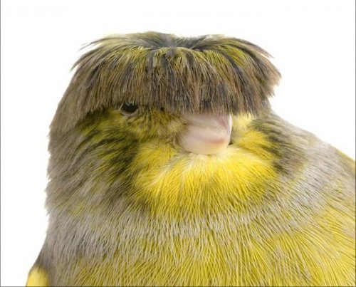 Смешная причёска от природы (20 фото)