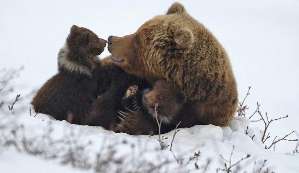 Подборка фотографий диких животных (30 фото)
