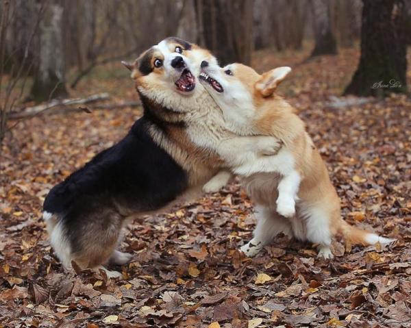 Смешные и забавные животные (35 фото)