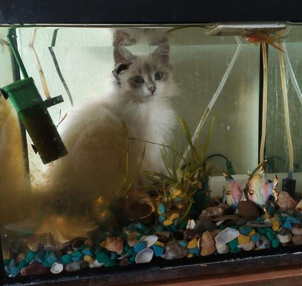 Водоплавающий котёнок