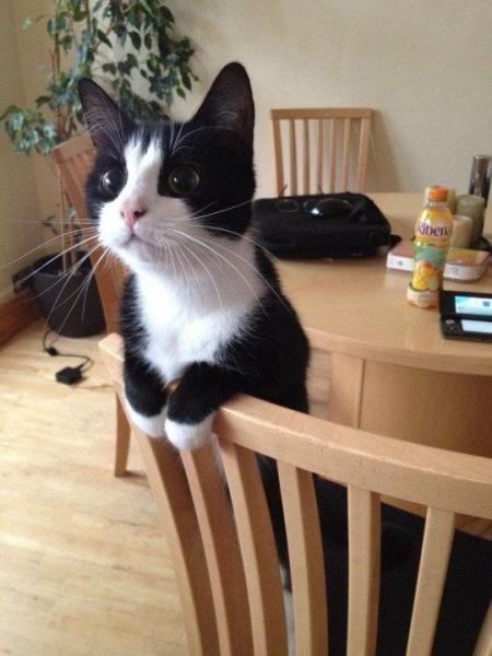 Очаровательные кошки (30 фото)