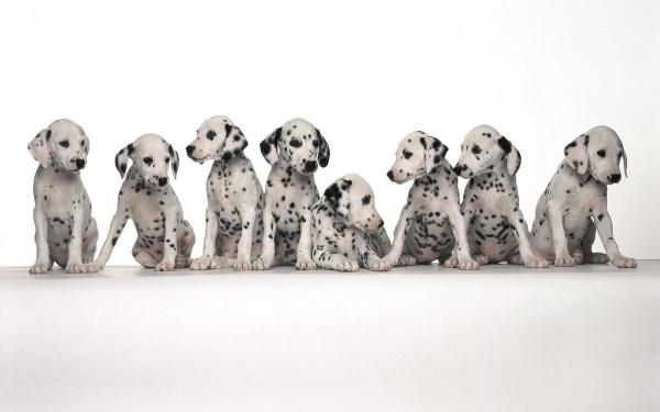 9 неожиданных аргументов, как нас лечат домашние животные