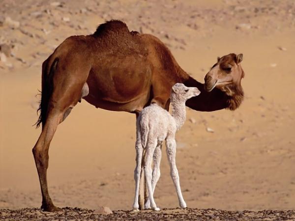 Мамы всякие нужны, мамы разные важны… (25 фото)