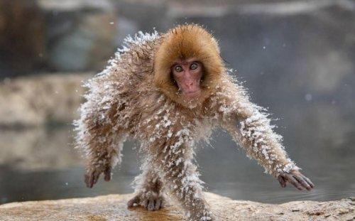В мире забавных животных (30 фото)