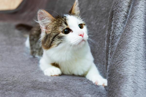 Забавные и милые котейки для хорошего настроения! (35 фото)