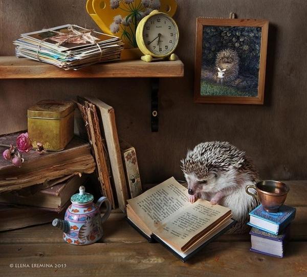 Очаровательные снимки ёжиков от Елены Ерёминой (18 фото)