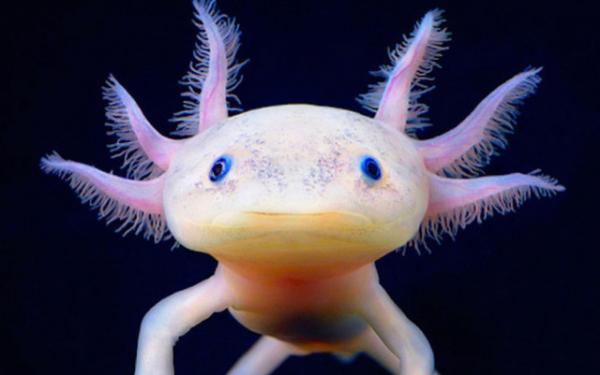 Самые странные домашние животные (8 фото)