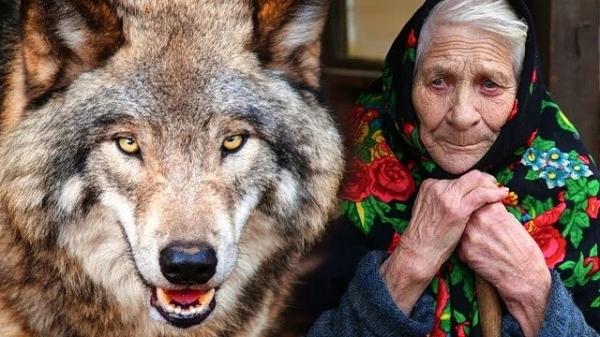 Благодарность волка