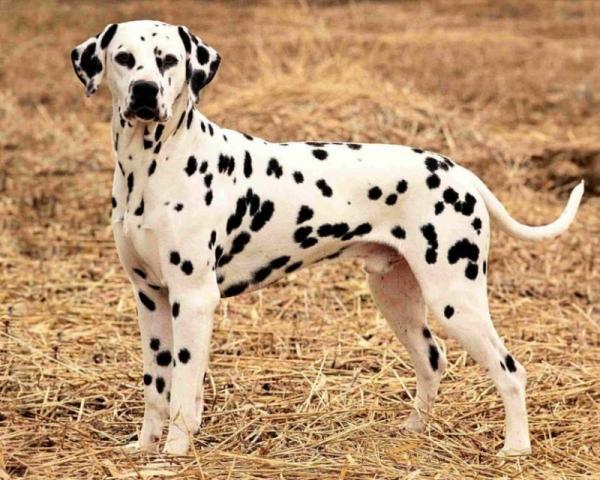 11 пятнистых животных, от которых захватывает дух