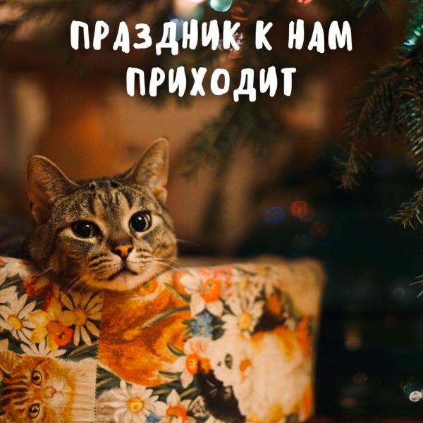 Котика кусь - всегда настоящий! (5 фото)