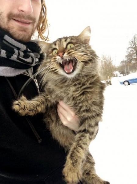 Очаровательные животные и первый снег (25 фото)