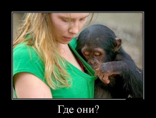 Демотиваторы с участием животных (30 фото)