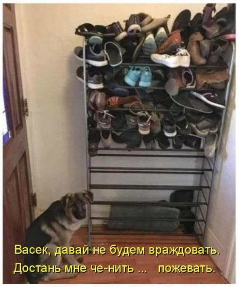 Прикольная котоматрица (30 фото)