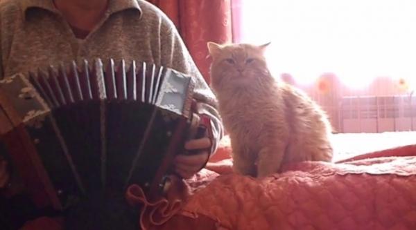 Юмор: Забавное видео: Котик обожает, когда хозяин играет на гармони!