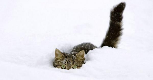 Юмор: Потешные коты, которые уже открыли зимний сезон