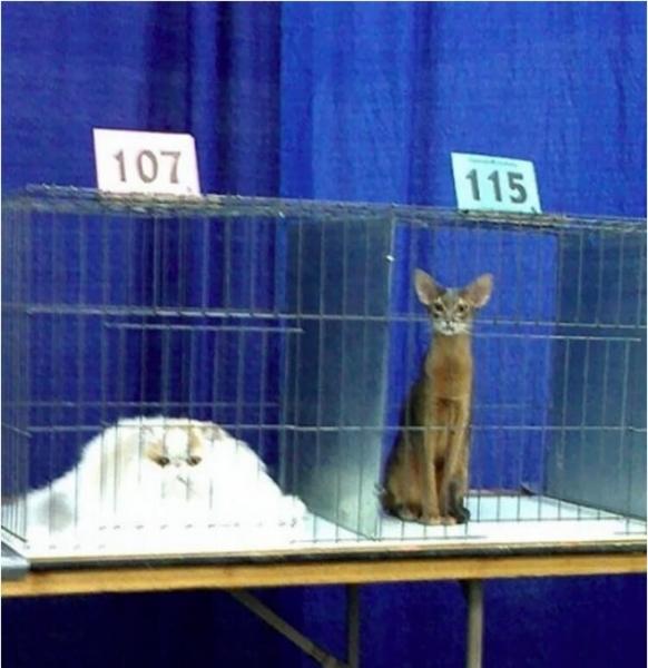 Забавные картинки: Животные, которые плавятся прямо на глазах (11 фото)
