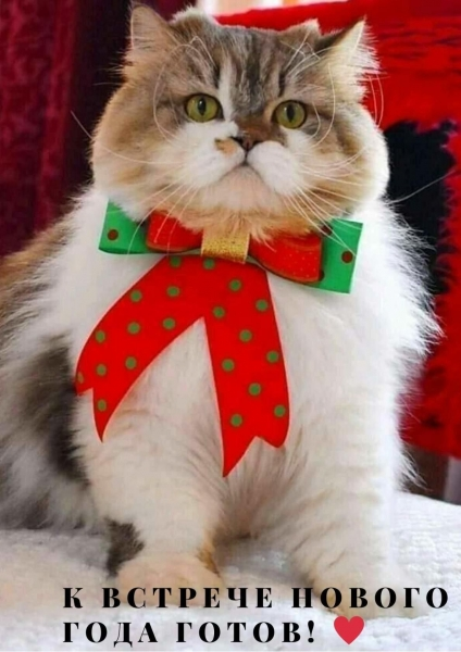 Праздничная котоматрица (30 фото)