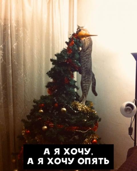 Новогодние вредители (5 фото)
