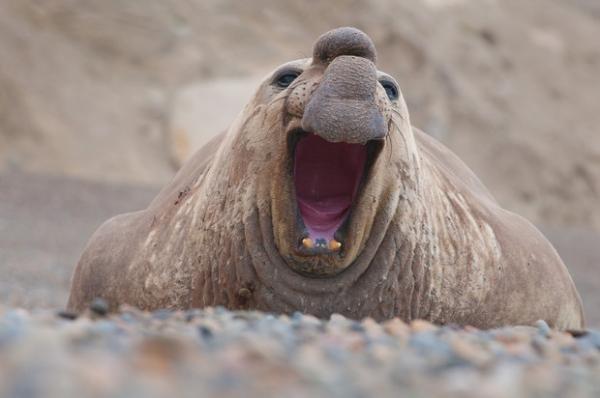 Удивительные гиганты животного мира (10 фото)