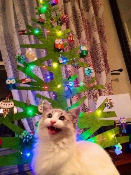 Пятничное кото-настроение (30 фото)