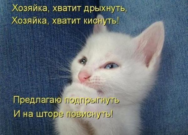 Ох уж эти кошки! (30 фото)