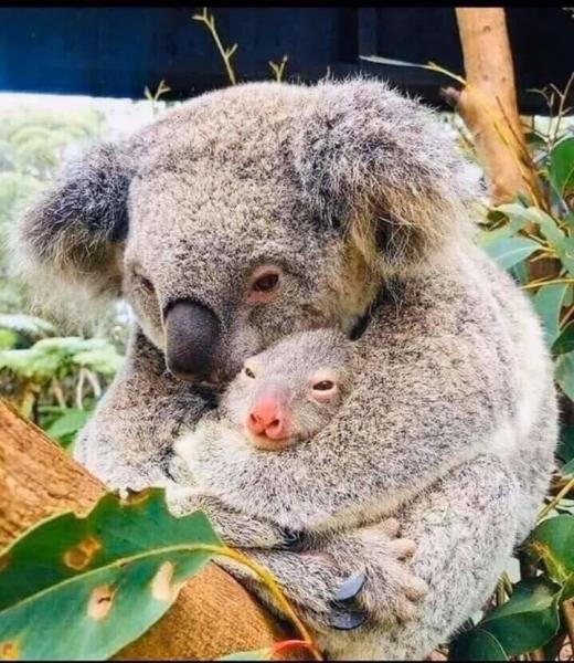 Фото дня: Австралийская Мадонна