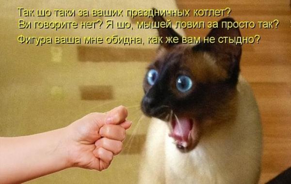 Забавные картинки для хорошего настроения! (30 фото)