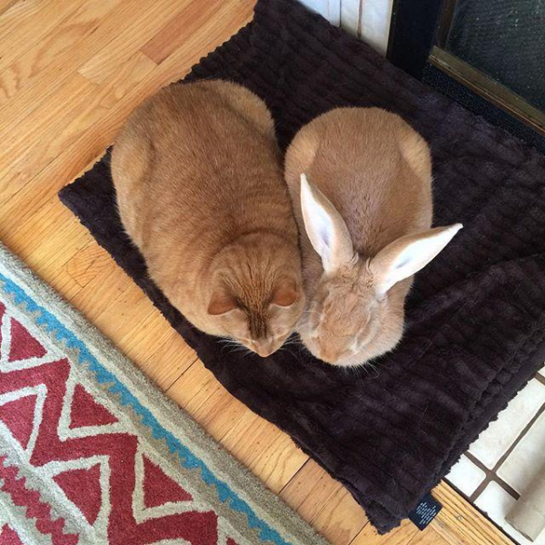 Дружба двух рыжих (5 фото)