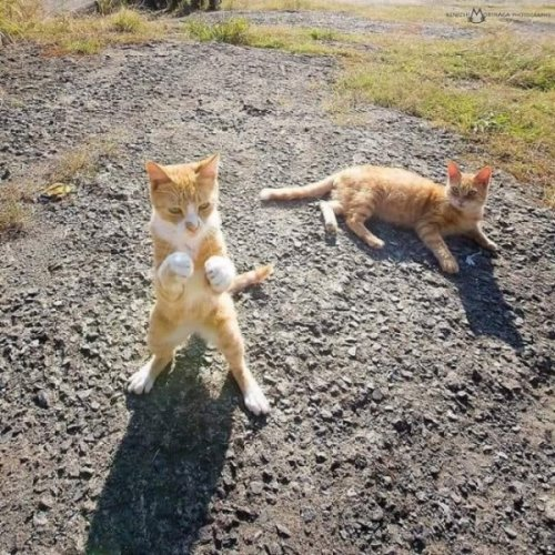 Самые прикольные кошки (30 фото)