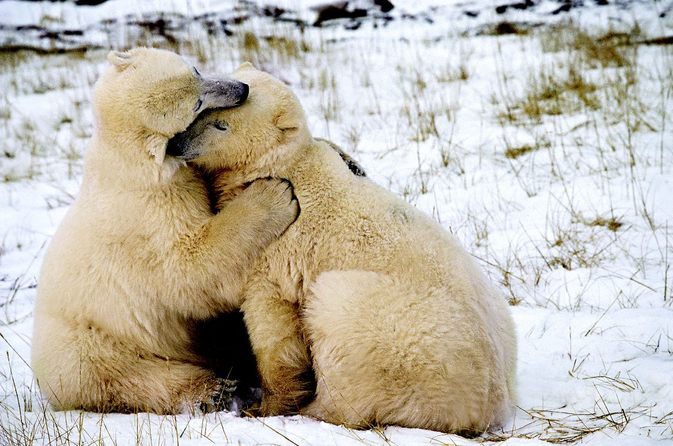 Медвежонок любит картинки