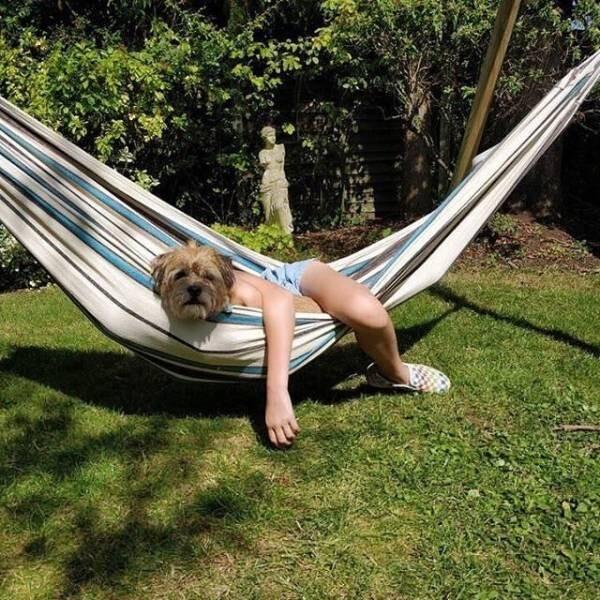 Необычные фотографии собак (18 фото)